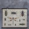 schoolkaart insecten