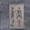 schoolkaart skelet